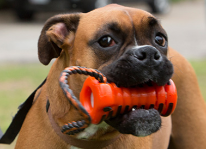 Zumby Dental Device For Dogs Slash Pets