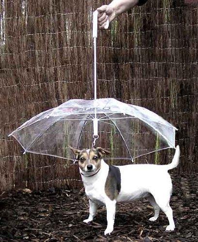 pet umbrealla
