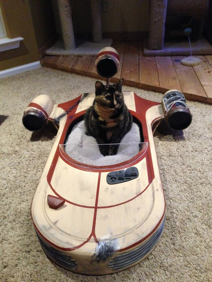 land speeder cat