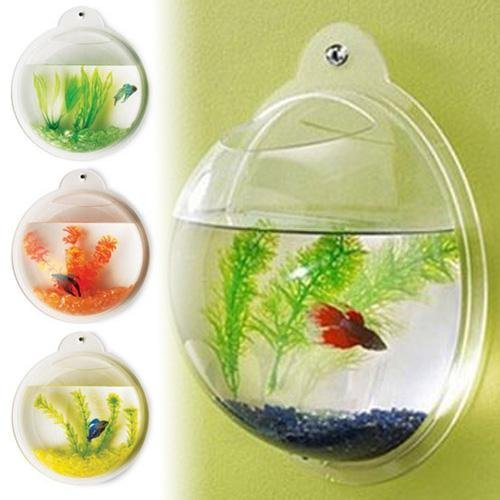 fish bubble