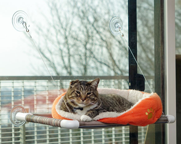 kitty-cot