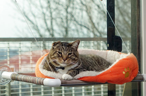 Kitty Cot Cat Perch Slash Pets