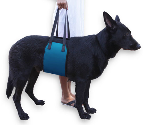 Rehab Dog Lift Harness For Injured Dogs Slash Pets