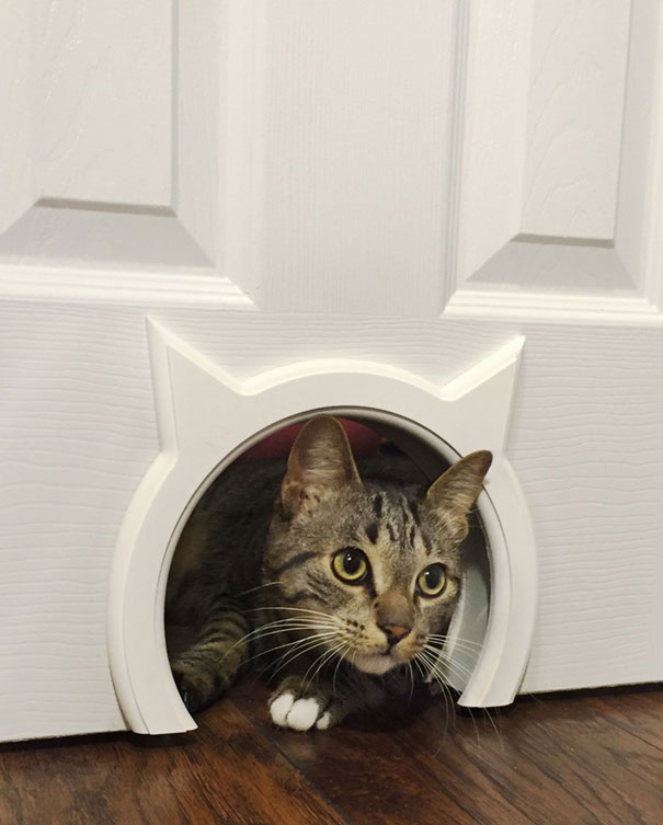 Kitty Pass Let Your Cat In Out Safely Slash Pets