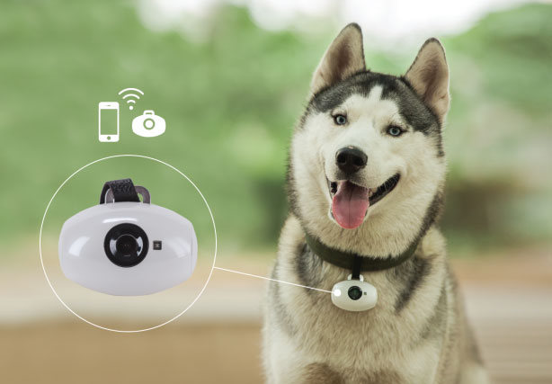 Pawscam Smart Wearable Camera For Dogs Slash Pets
