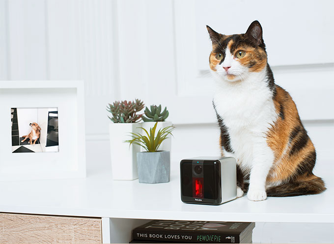 Petcube Play Smart Cat Camera With Laser Game Slash Pets
