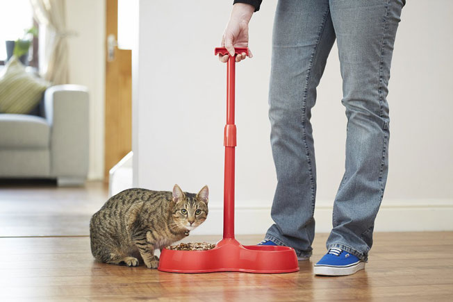 No Bend Pet Bowl Feed Your Pet Without Kneeling Slash Pets