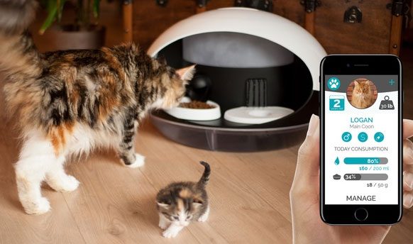 Android Read Cat Microchip
