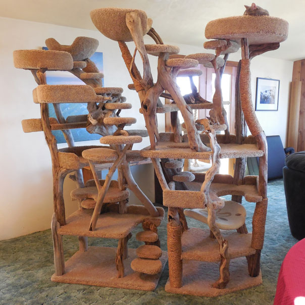 Custom Driftwood Cat Trees Slash Pets