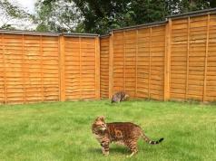 Dinosaur Cat Pet Grooming Slash Pets
