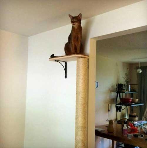 72 Inch Wall Mounted Cat Scratching Post Slash Pets