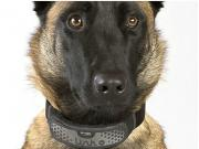 Slash Pets Coolest Cat Amp Dog Gadgets And Gizmos