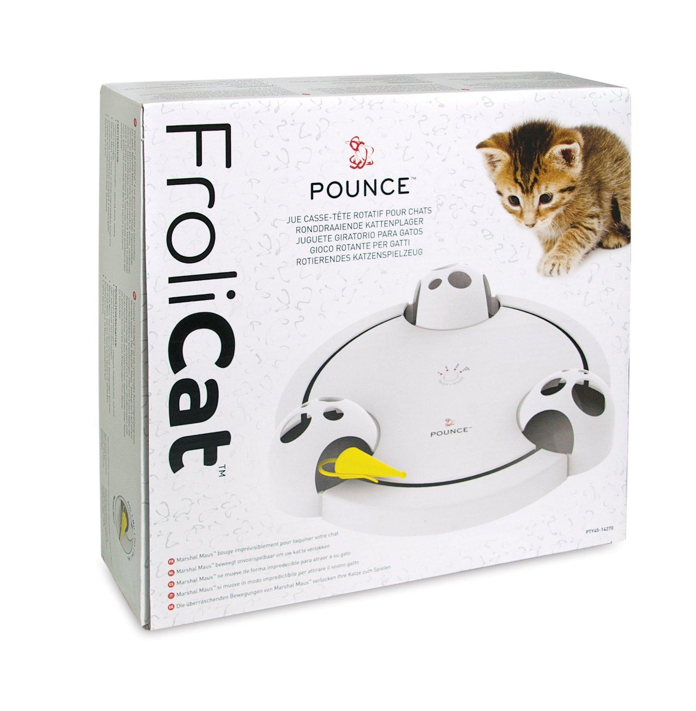 pounce cat
