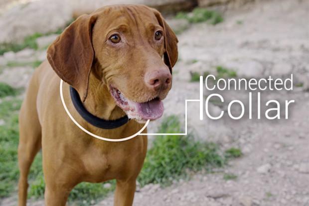Dogtelligent S Smart Dog Collar Health Tracker Finder