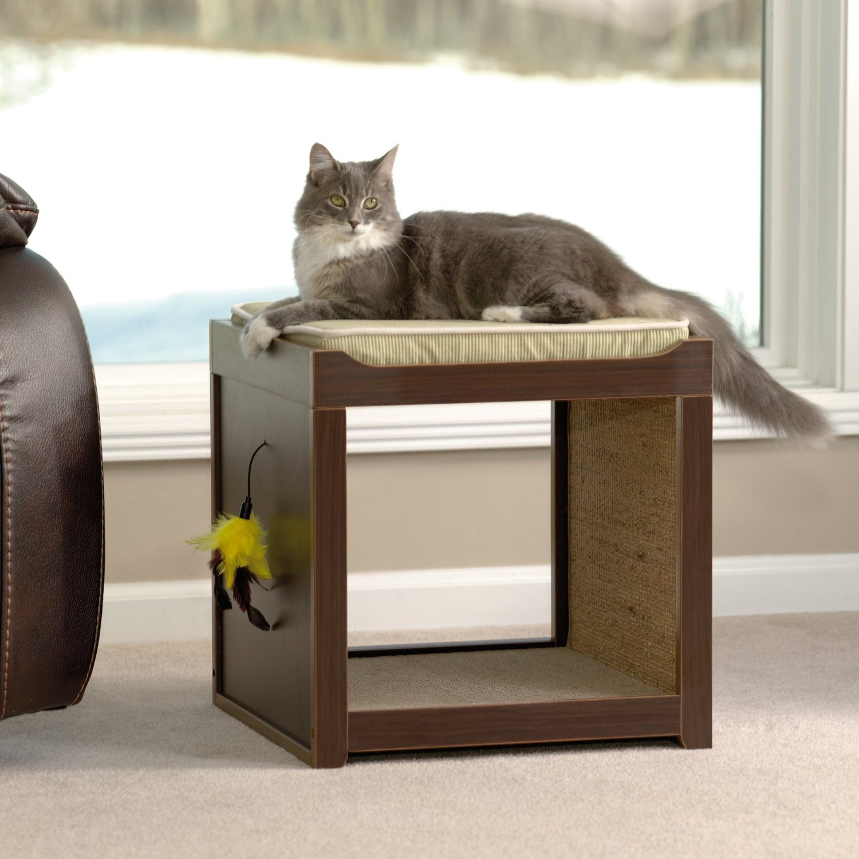 interactive cat cubre