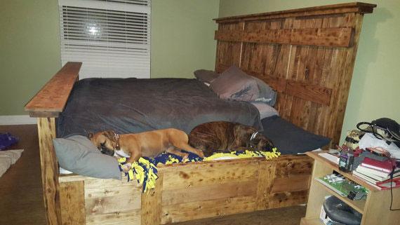 king-bed-dog