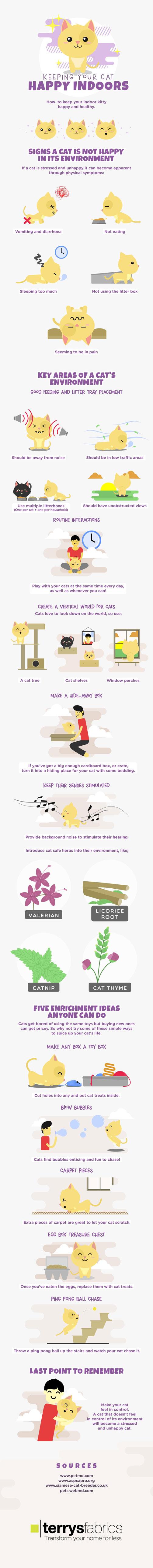 indoor-cats