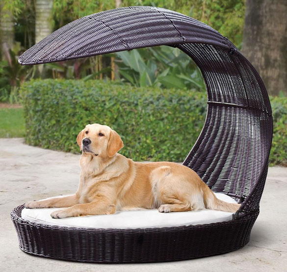 Dog-Rattan-Chaise-Lounger