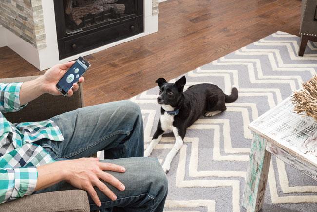 petsafe-smart-dog-trainer