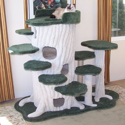 purrwood-forest-kitty-sanctuary