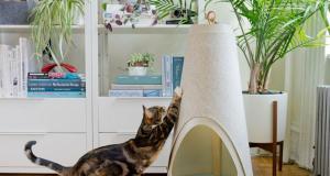 Ripple Rug Cat Activity Play Mat Slash Pets